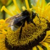 Victory! US Federal Court Bans Insecticide Linked To Bee Deaths