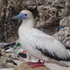 99% Of All Birds Will Have Plastic In Them By 2050, Reports New Study