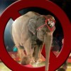 Netherlands Bans Wild Animals In Circuses