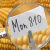 Latvia And Greece Kick Monsanto Out, Opt To Ban GM Crops!
