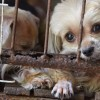Pet Store Employee Quits After Puppy Dies In Her Arms, Speaks Out About Puppy Mills