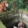 Dog Spends One Week Guarding Trapped Friend Until Help Arrives