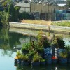 Floating Garden Purifies The Water Of The US' Most Polluted Waterway