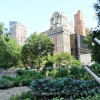 New York City Plants Its One Millionth Tree In Effort To Fight Climate Change