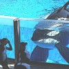 Your Activism Worked! Sea World Can No Longer Breed Orcas