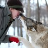 Wolf Sanctuary In Norway Lets You Cuddle Wolves While Watching The Northern Lights