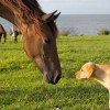 Study: Kids Raised With Puppies Or Ponies Have Reduced Risk For Asthma