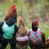 Kind Women Knit Sweaters For Rescued Chickens To Keep Them Warm