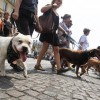 Dogs Are Now Recognized As Sentient Beings In France