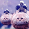 Belgium's Response To Terror Is To Flood The Internet With Cats