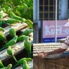 For 10 Years, This Man Has Cared For 4,000 Wild Parakeets After A Tsunami Left Them Displaced
