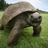Veterinarian Revives 183-Year-Old Tortoise With Prescription For Healthier Diet