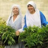 These Sister Act-ivists Grow Medical Marijuana, But Their Town Wants To Shut Them Down…