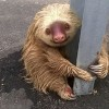 Officials Save Adorable Sloth Found Clinging To Highway Crash Barrier