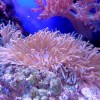Scientists May Have Learned How To Repopulate Damaged Coral Reefs