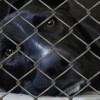 Humane? An Animal Shelter Uses This Highly Controversial Method To Put Down Dogs