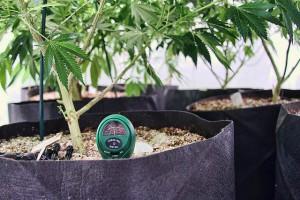 Colorado Legalizes Recreational Marijuana and Industrial Hemp