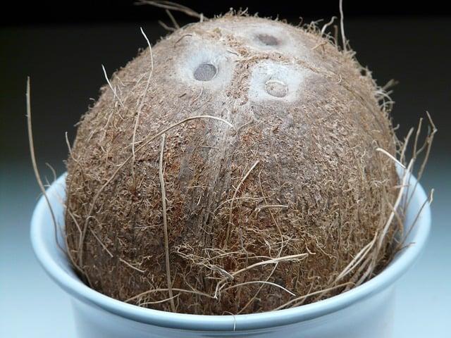 coconut-60390_640