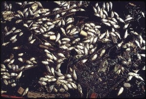 800px-DEAD_FISH_ON_THE_SHORE_OF_MIDDLE_BRANCH,_NEAR_PORT_COVINGTON_IN_BALTIMORE_HARBOR_-_NARA_-_546792