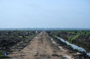 800px-Riau_palm_oil_2007