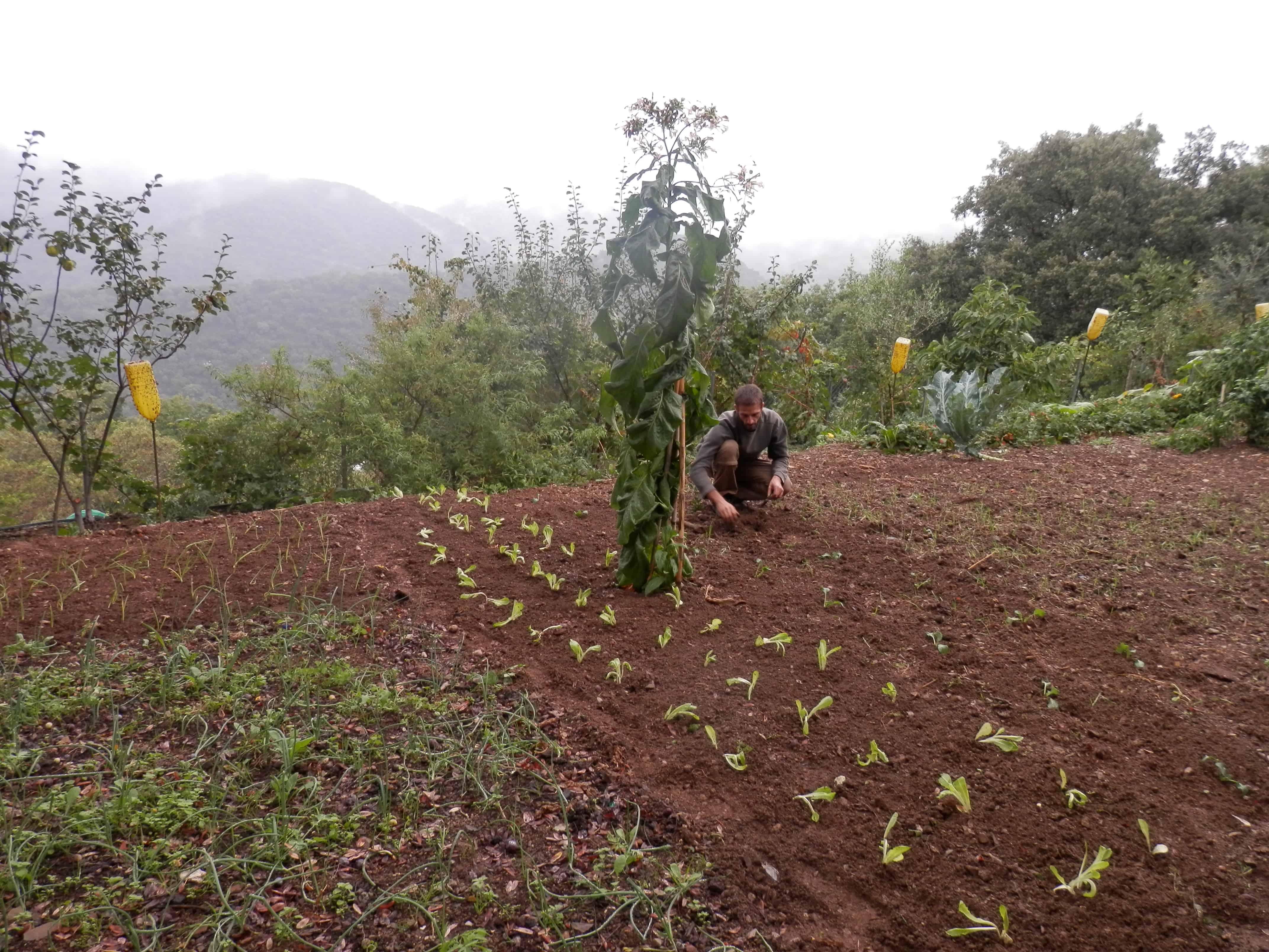 Organic urban gardening for beginners – True Activist