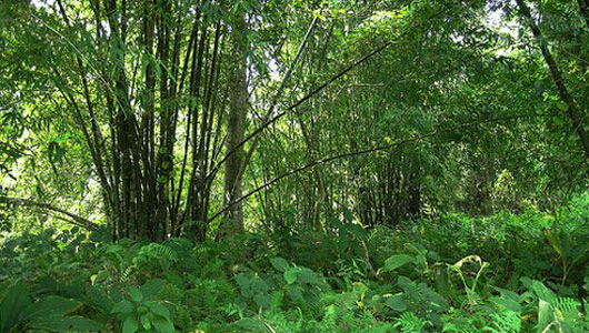 Molai Woods, credit: Flickr