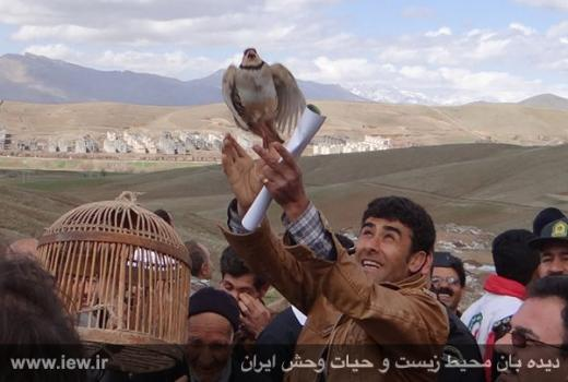 A hunter lets a captive partridge go free.  Credit: France24