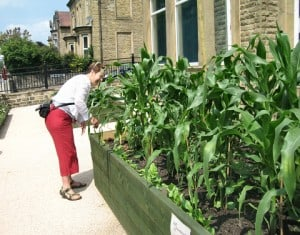´Vegetable tourism´has boosted the local economy