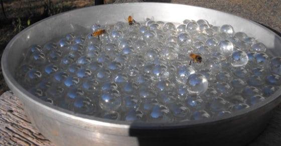 bees-need-water-tooo
