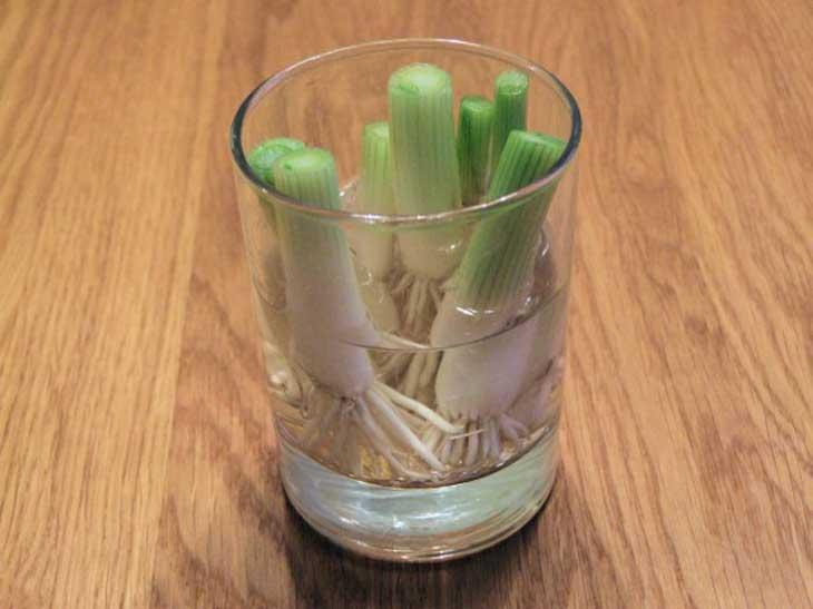 Green-Onions-578x433
