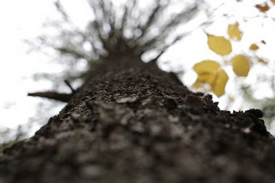 tree-bark