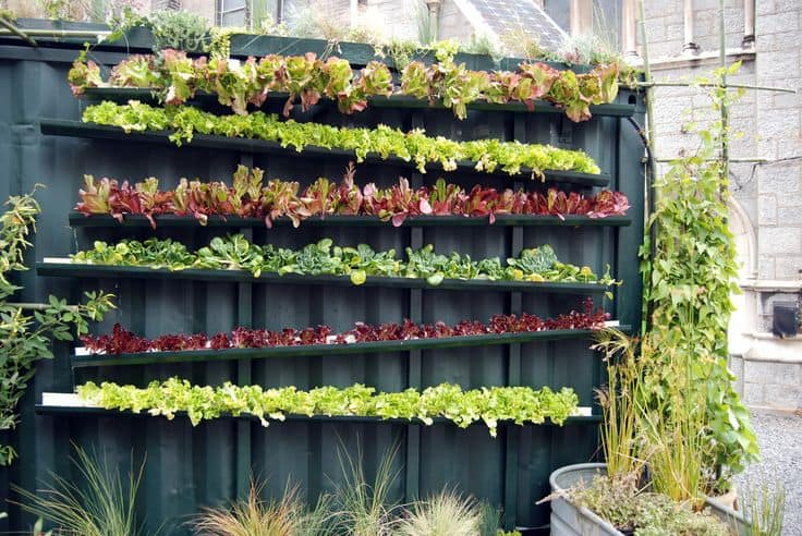 vertical  garden 11