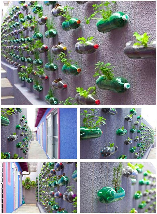 vertical garden 14