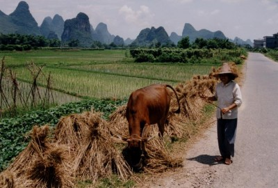 China_Rice_field_with_farmer