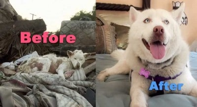 Remember Miley The Dog That Lived On A Trash Pile? This Is Her Transformation!