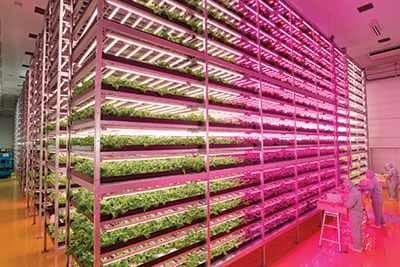 indoorfarm