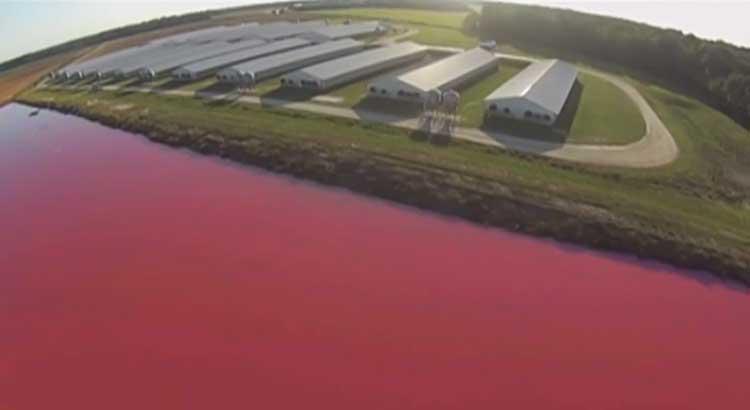 pig-farm-exposed