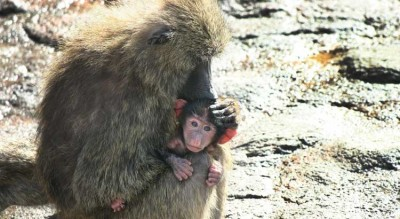 Scientist Finds That Animals Have Innate Sense For Humility, Fairness and Compassion.
