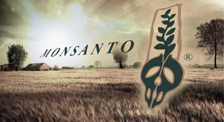 monsantograss1
