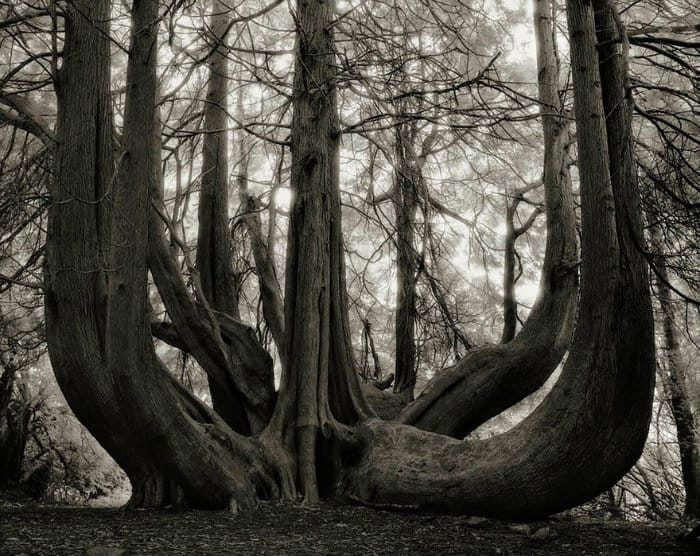 tree-14