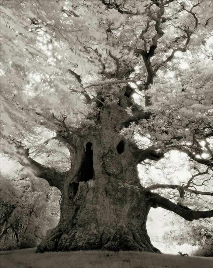 tree-16