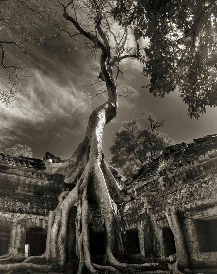 tree-17