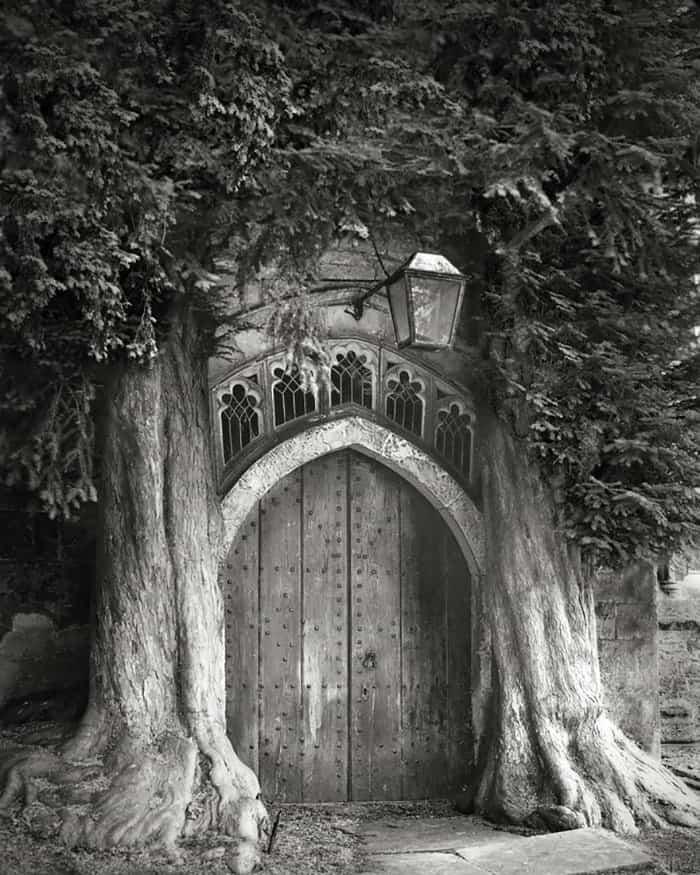 tree-9