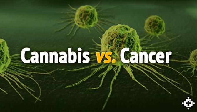 Watch As THC Destroys Cancer Cell's