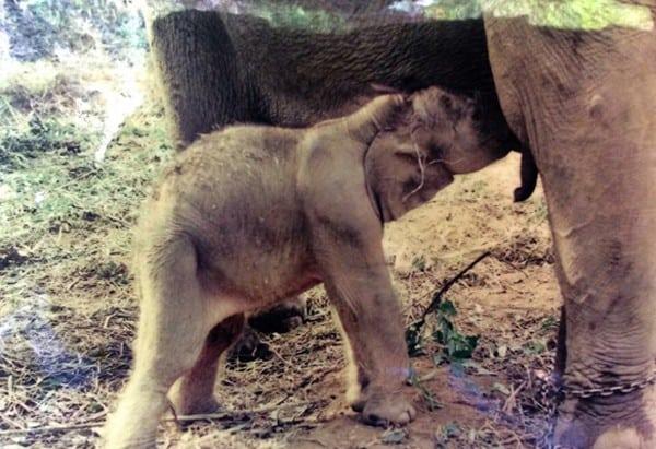 MeBai at only 1 week old.  Credit: Karen Mahout