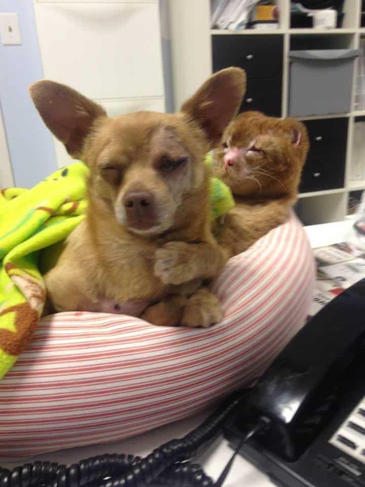 Credit: Animal Emergency Hospital And Urgent Care
