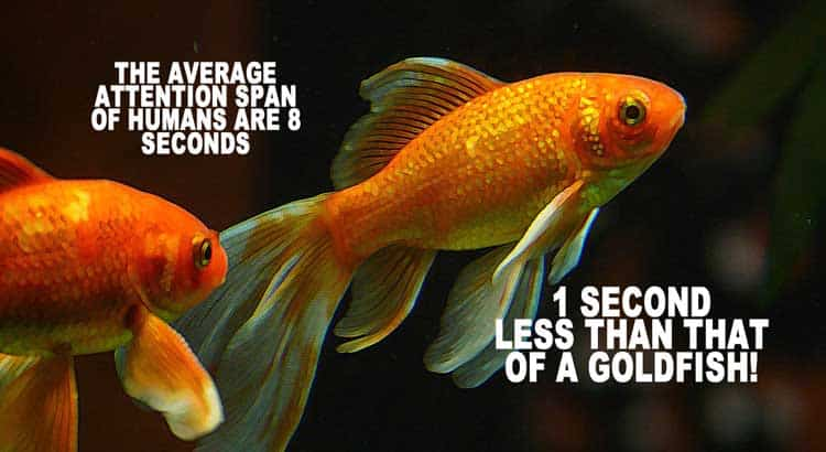 http://ta1.universaltelegra.netdna-cdn.com/wp-content/uploads/2015/05/fish.jpg