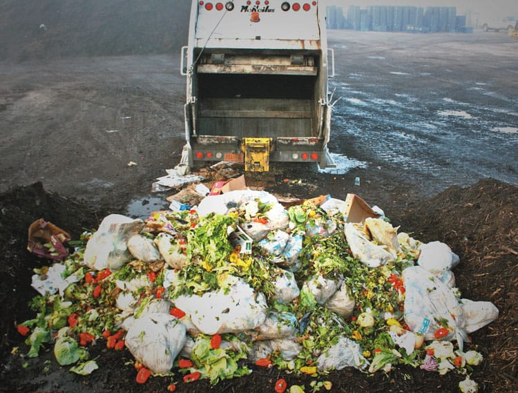 What Stores Throw Away Good Food