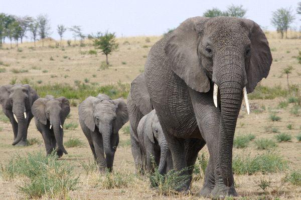 Credit: Elephant-World.com
