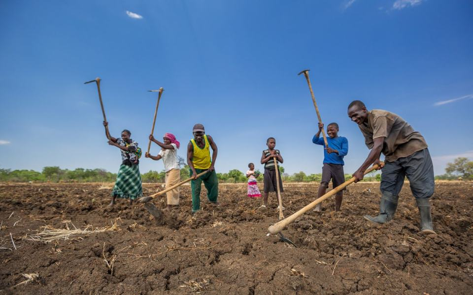 A former hunter and his family prepare rice fields for the imminent Luangwa river basin flooding. Credit: Gael McKeon